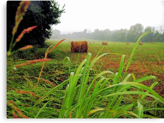 """""""Tall Grass and Hay Bales""""... prints and products by © Bob Hall"""