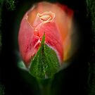 Heart of Darkness - Rosebud by MotherNature