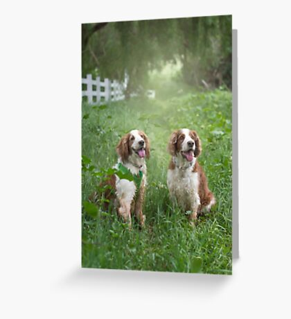 Two Welshies...... Greeting Card