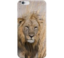 Male lion sitting up iPhone Case/Skin