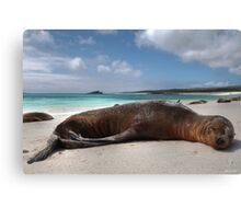 Galapagos Innocence - Limited Edition 1/10 Canvas Print