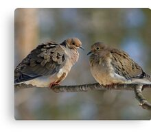 Mourning Dove Canvas Print