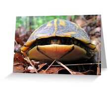 Turtle Sneaks a Peek Greeting Card