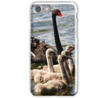 Black Swan and Cygnets iPhone Case/Skin