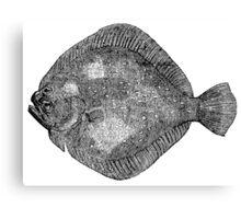Vintage Marine Turbot Flounder Fish Illustration Retro 1800s Black and White Image Canvas Print