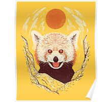 Red Panda on a Sunny Day Poster