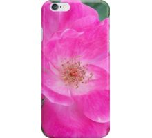 Pink Rose of Mary Windows From Heaven iPhone Case/Skin