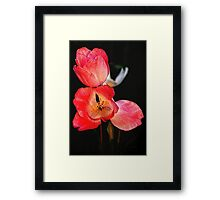 Embossed Tulips Framed Print