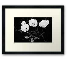 Four Tulips in Monochrome Framed Print