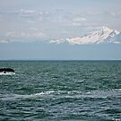 Humpback Whale and snow mountain by RichImage