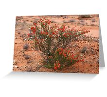 Red Wildflower Greeting Card