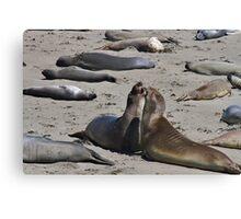 California Seals Canvas Print