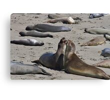 California Seals Canvas Print