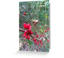 red berries on branch Greeting Card
