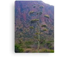 tree in the mountains Canvas Print