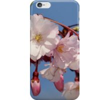 Weeping Cherry blossoms iPhone Case/Skin