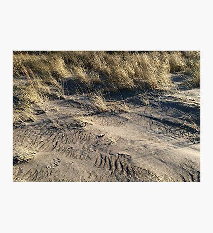 sand dune grass Photographic Print