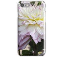 Creamy Dahlias With Lavender Fringed Petals iPhone Case/Skin