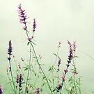 Floral Mist  by Karen E Camilleri