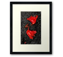 Playing Dead .2 Framed Print