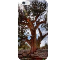 Old Craggily Tree iPhone Case/Skin