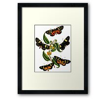 FF - Butterfly-2 Framed Print