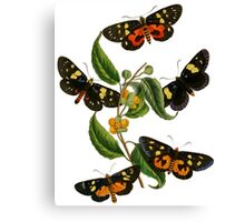 FF - Butterfly-2 Canvas Print