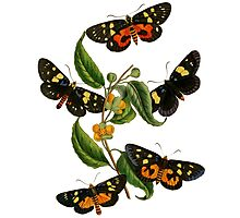 FF - Butterfly-2 Photographic Print