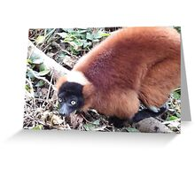 Red Ruffed Lemur Greeting Card