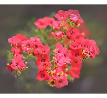 Red Wildflowers Photographic Print