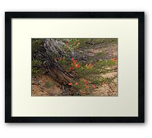 Red Wildflower Framed Print
