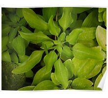Green Mood Poster