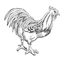 Rooster Pen and Ink Photographic Print