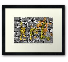 Color Vines & Black White Framed Print