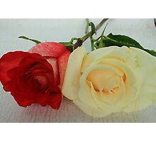 White and Red Rose Photographic Print