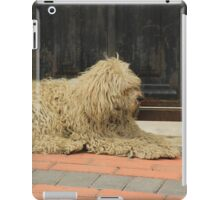 Shaggy White Dog iPad Case/Skin