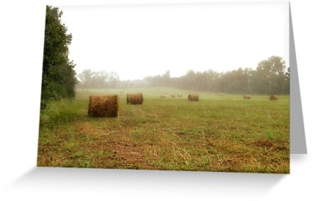 """""""Bales: Here, and There""""... prints and products by © Bob Hall"""