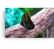 Butterfly on log Metal Print