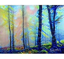 Sunrise in the Woods Photographic Print