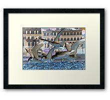 Herring Gulls inverted Framed Print