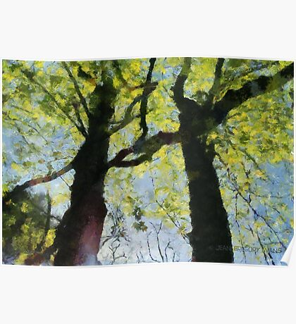Springtime Morning With Twin Forest Trees  Poster