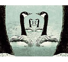 Synchronized Swimming Geese  Photographic Print