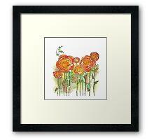 Summer ranunculus garden Framed Print