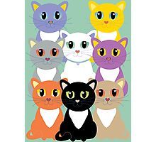 Only Eight Cats Photographic Print