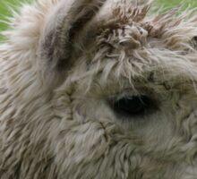 Alpacabagthen Sticker