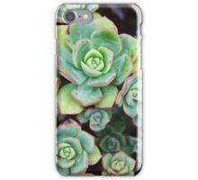 Succulence iPhone Case/Skin