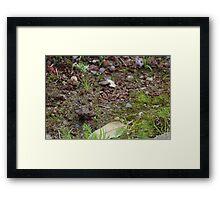 Dirt Framed Print
