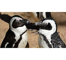 lovers penguins Photographic Print