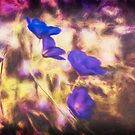 Violet Abstract by KatMagic Photography