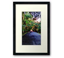 Canopy Road Framed Print